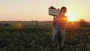 Lebensmittel aus Litauen: ein nachhaltiger Gewinn für den deutschen Markt